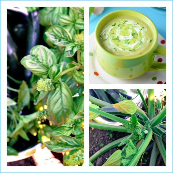 Low carb zucchii and basil soup